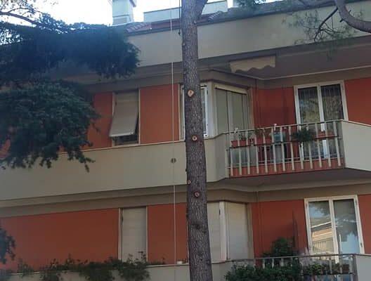 Taglio albero di 15 metri in cordata