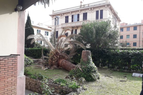 Taglio palma attaccata dal punteruolo rosso